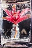 Abstrakt undervattens- sammansättning med oskarpa orkidékronblad Royaltyfria Foton