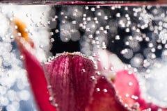 Abstrakt undervattens- sammansättning med oskarpa orkidékronblad Royaltyfri Foto