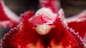Abstrakt undervattens- sammansättning med oskarpa orkidékronblad och bubblor Arkivfoton