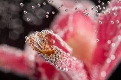 Abstrakt undervattens- sammansättning med oskarpa orkidékronblad och bubblor Royaltyfria Foton
