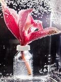 Abstrakt undervattens- sammansättning med oskarpa orkidékronblad och bubblor Royaltyfri Bild