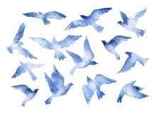 Abstrakt uppsättning för flygfågel med vattenfärgtextur som isoleras på vit bakgrund Arkivbilder