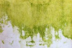Abstrakt vägg för gräsplan- och vitbakgrundscement Arkivfoton