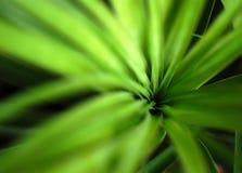 abstrakt växt Royaltyfri Fotografi