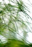 abstrakt växter Royaltyfria Bilder