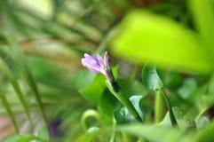 abstrakt växter arkivbild