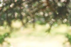 Abstrakt vår och suddig bakgrund för sommar med bokeh Royaltyfria Foton