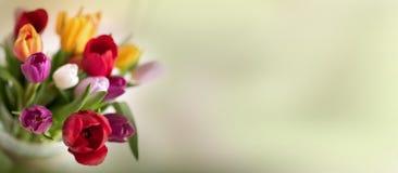 Abstrakt vårbakgrund med tulpan Royaltyfria Foton