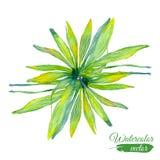 Abstrakt vattenfärgbaner för vektor med palmblad Fotografering för Bildbyråer
