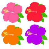 abstrakt vektor för blommahibiskusillustration Redigerbar vektorillustration Royaltyfri Fotografi