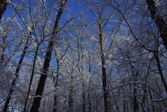 abstrakt vinter för fractalbildsky Arkivbild