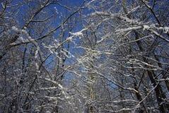 abstrakt vinter för fractalbildsky Arkivbilder
