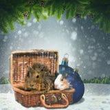Abstrakt vinter och Xmas-bakgrunder Royaltyfria Bilder
