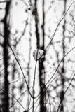 Abstrakt vinterbakgrund Fotografering för Bildbyråer