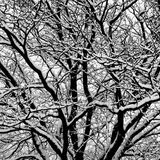 Abstrakt vintersammansättning Royaltyfria Bilder