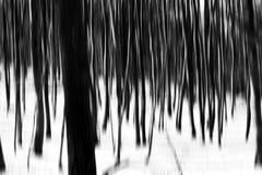 Abstrakt vinterskog arkivbild