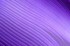 Abstrakt violett bakgrund med diagonalen Royaltyfria Foton