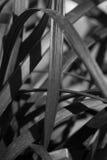 Abstrakt w czerni i siwieje Obraz Stock
