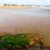abstrakt w Morocco Africa oceanu dennej fala i ptaku Fotografia Stock