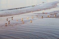 abstrakt w Morocco Africa oceanu dennej fala i ptaku Zdjęcia Stock