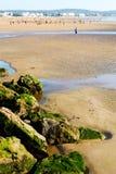 abstrakt w Morocco Africa oceanu dennej fala i ptaku Zdjęcie Royalty Free