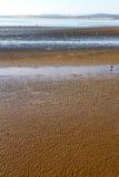 abstrakt w Morocco Africa oceanu dennej fala i ptaku Obraz Royalty Free