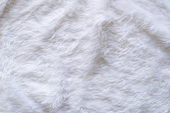 abstrakt white för pälsmakrofotografi Royaltyfria Bilder