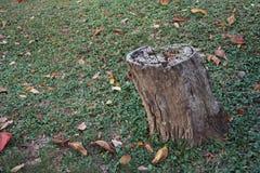 Abstrakt wood stam Arkivbilder