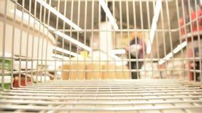 Abstrakt zamazujący wizerunek zakupów ludzie i centrum handlowe Wózek na zakupy widoku defocused tło z owoc zbiory