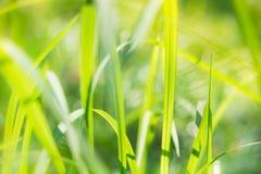 Abstrakt zamazujący zielony liść na świetle słonecznym Obrazy Royalty Free
