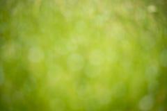 Abstrakt zamazuje naturalnego zielonego tło obrazy stock