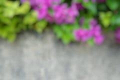 Abstrakt, zamazywać menchie kwitnie na zielonym naturalnym tle kwitnący bougainvillea, Fotografia Stock