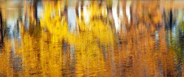 Abstrakt zamazywał odbicie jesienni żółci drzewa z liśćmi obrazy royalty free