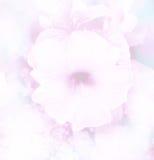 abstrakt zamazywał pięknego poślubnika w miękkim koloru kwiatu tle Obrazy Royalty Free