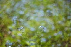 Abstrakt zamazywał tło z małymi błękitnymi kwiatami z pięknym bokeh Zdjęcie Royalty Free