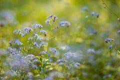 Abstrakt zamazywał tło z małymi pięknymi błękitnymi kwiatami z pięknym bokeh w świetle słonecznym Obrazy Stock