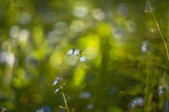 Abstrakt zamazywał tło z małymi pięknymi błękitnymi kwiatami z pięknym bokeh w świetle słonecznym Fotografia Stock