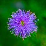 Abstrakt zamknięty w górę fotografii menchia kwiat zdjęcia royalty free