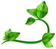 Abstrakt zieleni gałąź z liśćmi jako dekoracja Zdjęcie Royalty Free