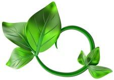 Abstrakt zieleni gałąź z liśćmi jako dekoracja Obraz Royalty Free