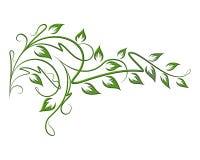Abstrakt zieleni gałązka dla ciebie wystrój Zdjęcia Stock