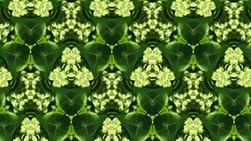 Abstrakt zieleni liści fotografii kształt i wzór Zdjęcia Stock