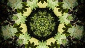 Abstrakt zieleni liści fotografii kształt i wzór Obrazy Royalty Free