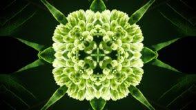 Abstrakt zieleni liści fotografii kształt i wzór Fotografia Royalty Free