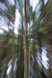 Abstrakt zoom av träd Royaltyfri Bild