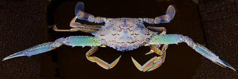 Abstrakta Art Blue Crab Fotografering för Bildbyråer
