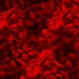 Abstrakta atramentu obłoczny tło Czerwony kolor Wodna farba, sztuki banne Zdjęcie Royalty Free