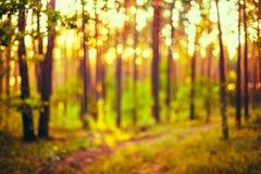 Abstrakta Autumn Nature Green och gulingfärger fotografering för bildbyråer