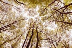 Abstrakta Autumn Tree Canopy 2 arkivbild