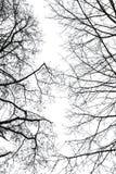Abstrakta avlövade trädfilialer i vinter Arkivbild